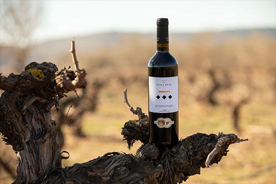 Región & Vinos | Bodegas Vega Real