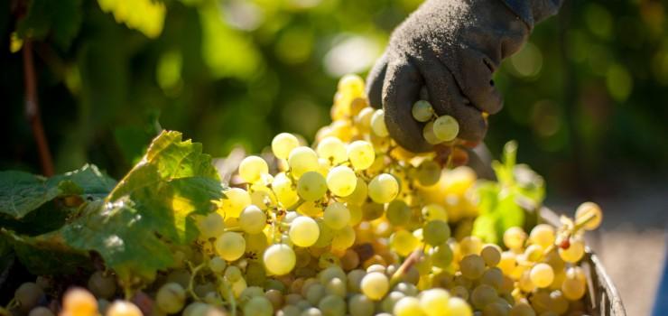 Barbadillo apoya a los viticultores